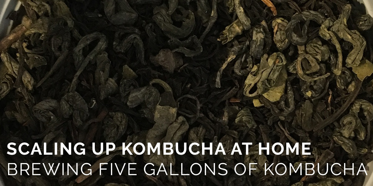 Scaling Up Kombucha Brewing at Home